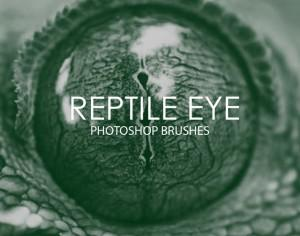 Free Reptile Eye Photoshop Brushes Photoshop brush