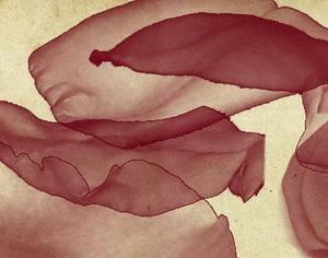 Rose petals brush Photoshop brush