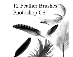 Feather Brushes Photoshop brush