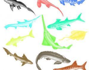 Cartilaginous Fish Brushes Photoshop brush