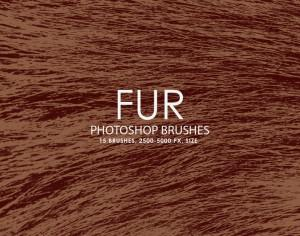 Free Fur Photoshop brushes Photoshop brush