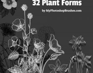 32 Plant Forms Brushes Photoshop brush