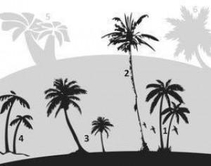 Palm Trees Photoshop brush