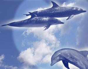 Dolphins Photoshop brush
