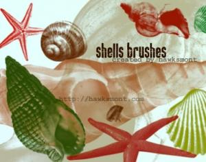 Shells Photoshop brush