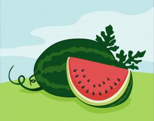 Vector illustration of Watermelon Photoshop brush