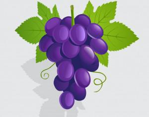 Vector illustration Grapes Photoshop brush