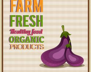 Food vector illustration with egg plant and typography Photoshop brush