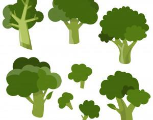 Fresh broccoli vector set Photoshop brush