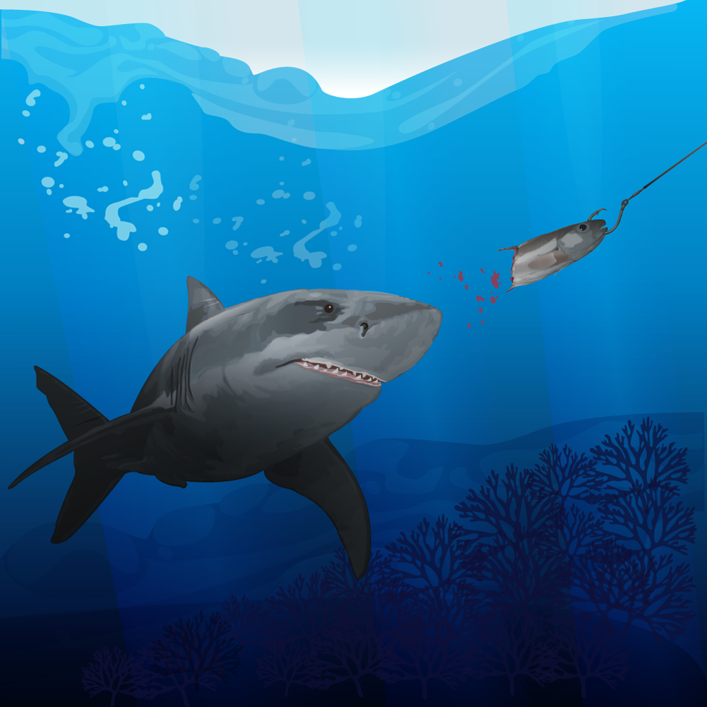 hunting shark Photoshop brush